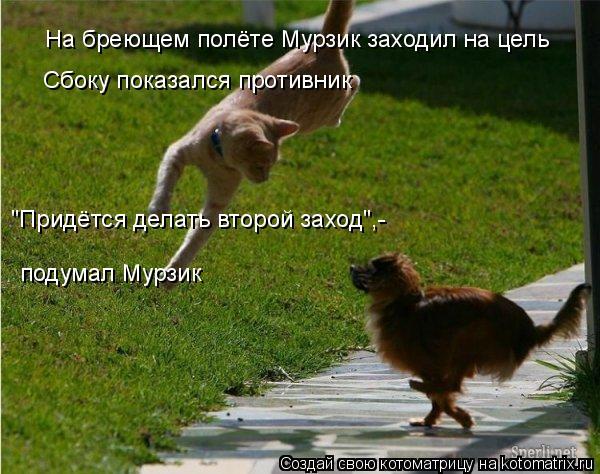 """Котоматрица: На бреющем полёте Мурзик заходил на цель Сбоку показался противник """"Придётся делать второй заход"""",- подумал Мурзик"""