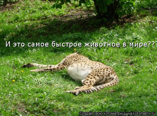 Котоматрица: И это самое быстрое животное в мире???