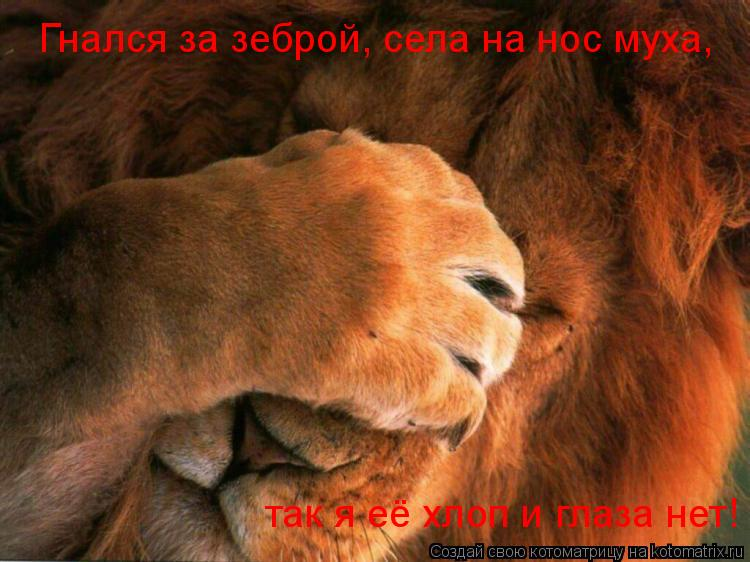 Котоматрица: Гнался за зеброй, села на нос муха, так я её хлоп и глаза нет!