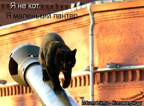Котоматрица: Я не кот. Я маленький пантер