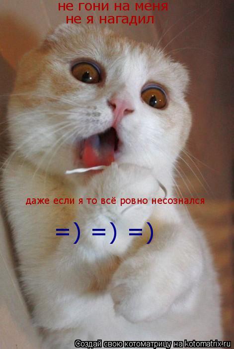 Котоматрица: не гони на меня не я нагадил даже если я то всё ровно несознался  =) =) =)