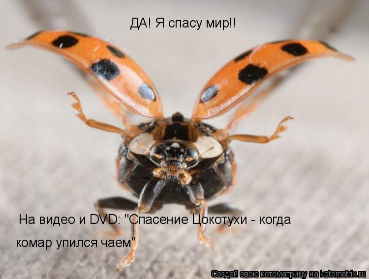 """Котоматрица: ДА! Я спасу мир!!  На видео и DVD: """"Спасение Цокотухи - когда  комар упился чаем"""""""