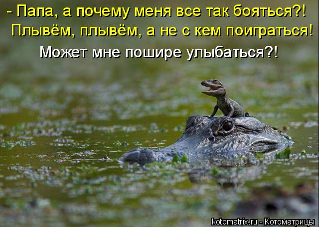 Котоматрица: - Папа, а почему меня все так бояться?! Плывём, плывём, а не с кем поиграться! Может мне пошире улыбаться?!