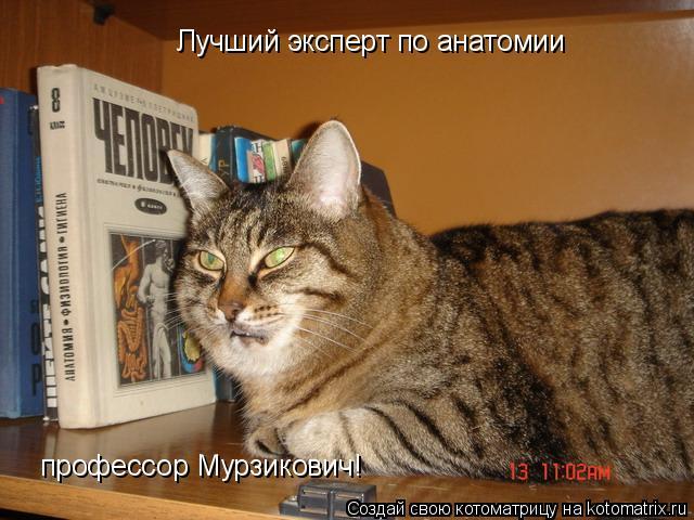 Котоматрица: Лучший эксперт по анатомии профессор Мурзикович Лучший эксперт по анатомии профессор Мурзикович!