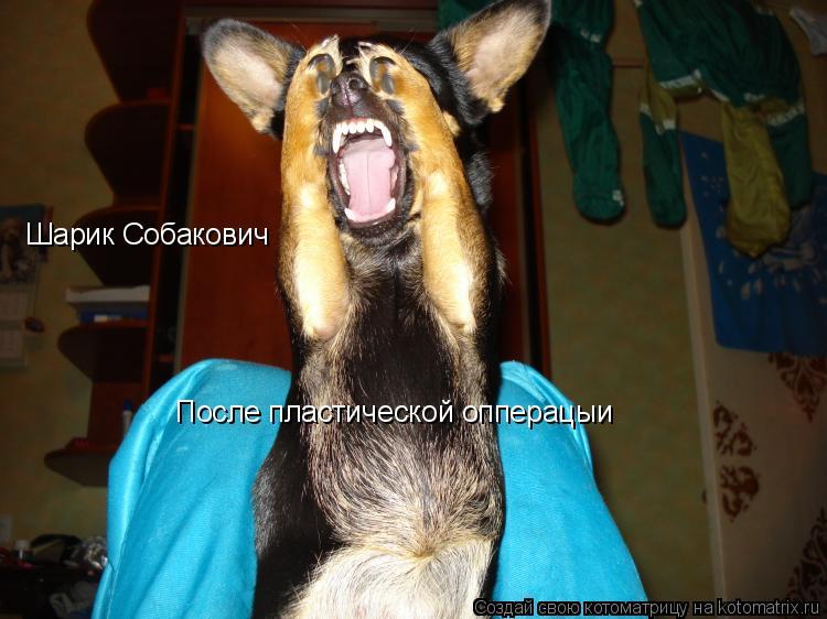 Котоматрица: Шарик Собакович После пластической опперацыи