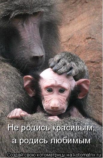 Котоматрица: Не родись красивым, а родись любимым