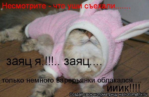 Котоматрица: Несмотрите - что уши съехали.......  Несмотрите - что уши съехали.......  заяц я.!!!.. заяц....  только немного варерьянки облакался....  ииик!!!!