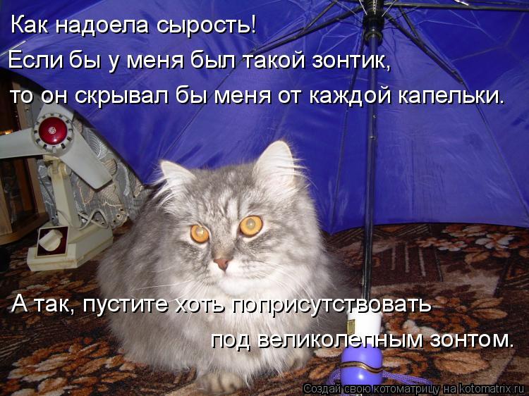 Котоматрица: Как надоела сырость! Если бы у меня был такой зонтик, то он скрывал бы меня от каждой капельки. А так, пустите хоть поприсутствовать  под вели