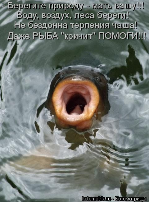 """Котоматрица: - Берегите природу - мать вашу!!! Воду, воздух, леса береги! Не бездонна терпения чаша! Даже РЫБА """"кричит"""" ПОМОГИ!!!"""