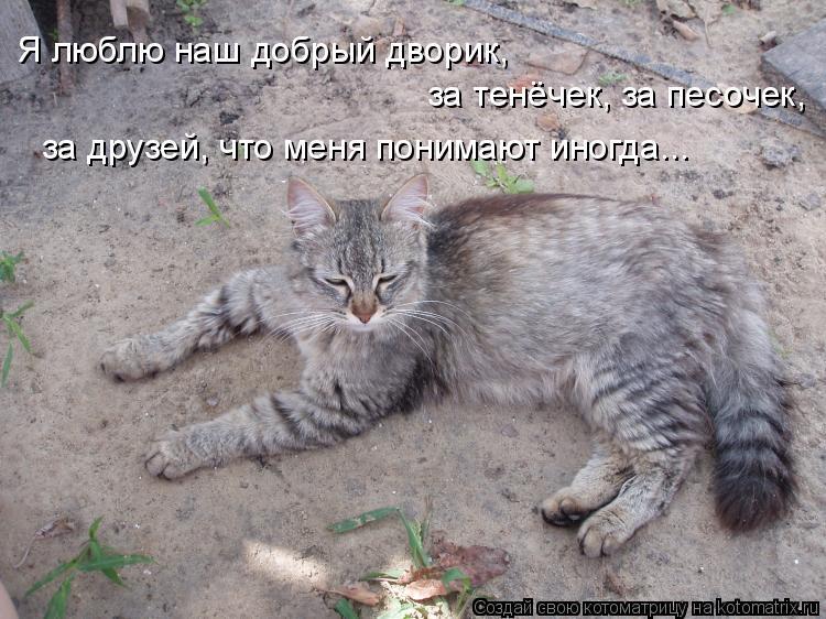 Котоматрица: Я люблю наш добрый дворик, за тенёчек, за песочек, за друзей, что меня понимают иногда...