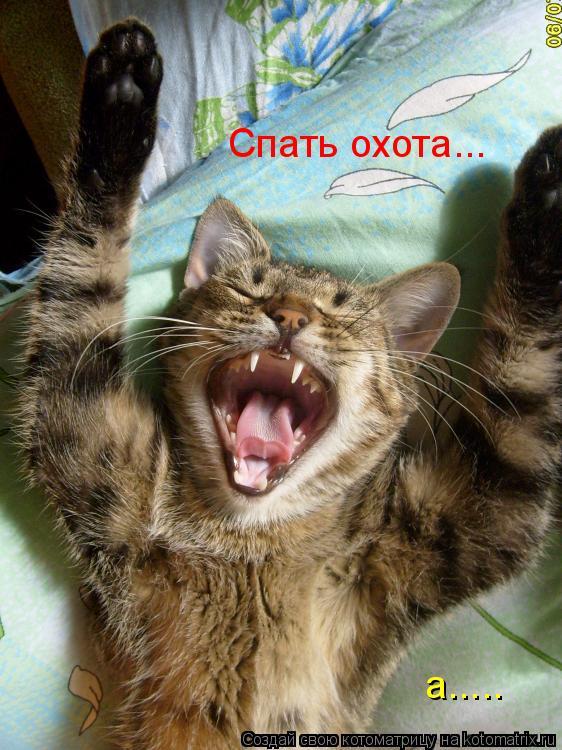 Котоматрица: а..... Спать охота...