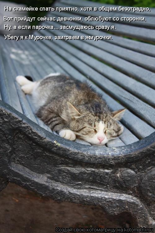 Котоматрица: На скамейке спать приятно, хотя в общем безотрадно, Ну, а если парочка... засмущаюсь сразу я. Вот прийдут сейчас девчонки, облюбуют со сторонк
