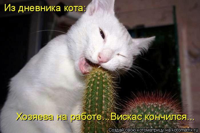 Котоматрица: Из дневника кота: Хозяева на работе...Вискас кончился...