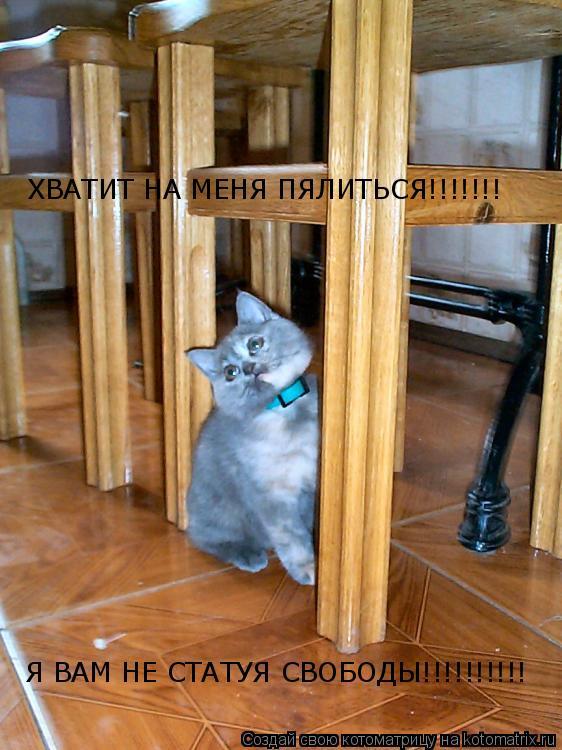 Котоматрица: ХВАТИТ НА МЕНЯ ПЯЛИТЬСЯ!!!!!!! Я ВАМ НЕ СТАТУЯ СВОБОДЫ!!!!!!!!!!