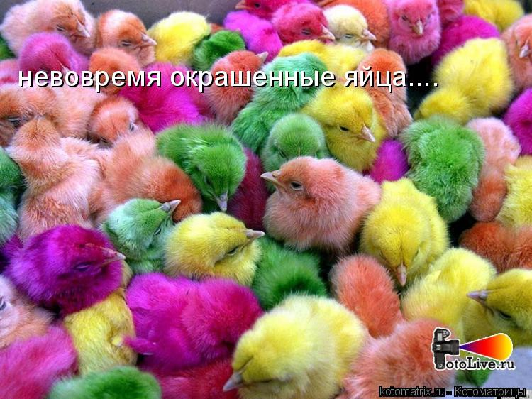 Котоматрица: невовремя окрашенные яйца....