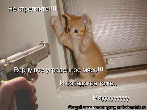 Котоматрица: Не стреляйте!!!! Верну все украденное мясо!!! И соседское тоже.... Мяууууууууу