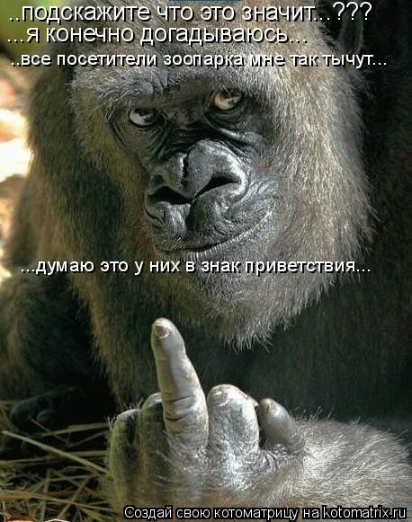 Котоматрица: ..подскажите что это значит...??? ...я конечно догадываюсь... ..все посетители зоопарка мне так тычут... ...думаю это у них в знак приветствия...