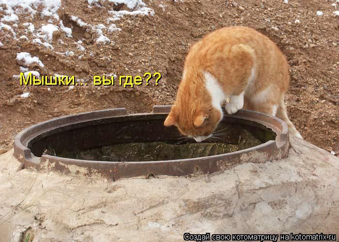Котоматрица: Мышки... вы где??