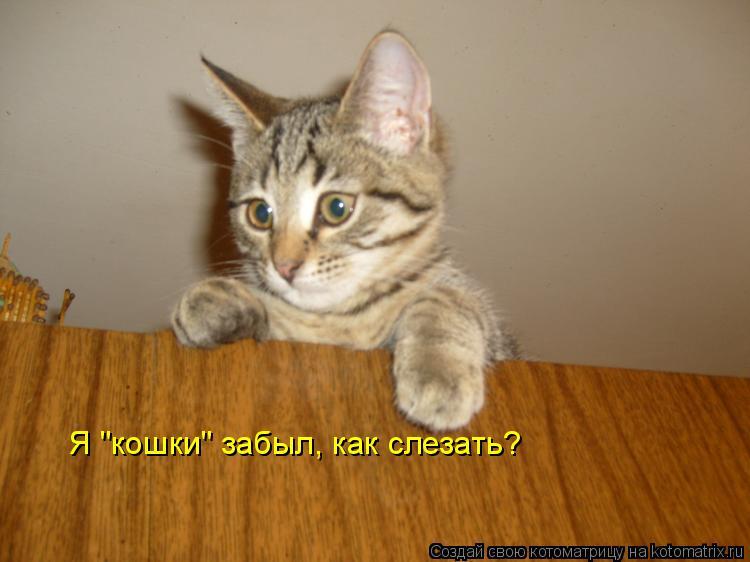 """Котоматрица: Я """"кошки"""" забыл, как слезать?"""