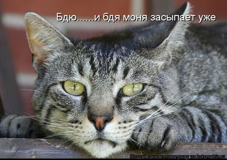 Котоматрица: Бдю......и бдя моня засыпает уже