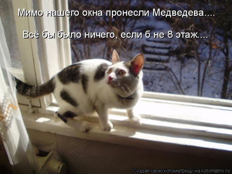 Котоматрица: Мимо нашего окна пронесли Медведева.... Всё бы было ничего, если б не 8 этаж....