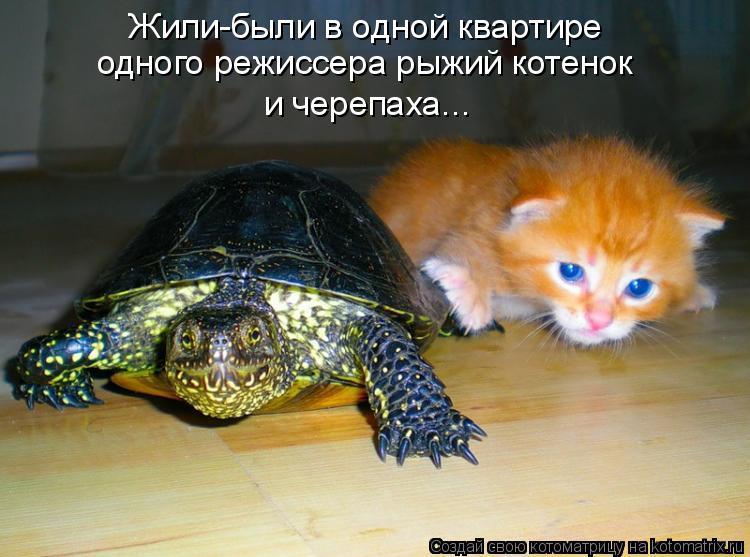 Котоматрица: Жили-были в одной квартире  одного режиссера рыжий котенок  и черепаха...