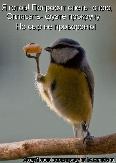 Котоматрица: Я готов! Попросят спеть- спою, Сплясать- фуэте прокручу Но сыр не провороню!