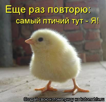 Котоматрица: Еще раз повторю:  самый птичий тут - Я!