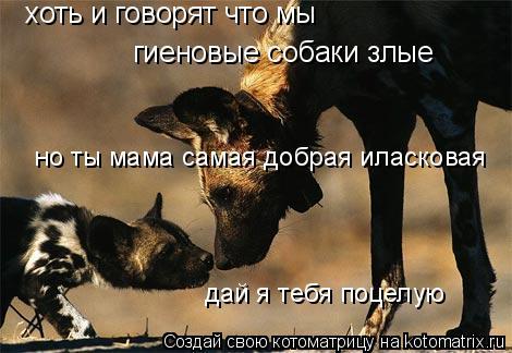 Котоматрица: хоть и говорят что мы  гиеновые собаки злые но ты мама самая добрая иласковая дай я тебя поцелую