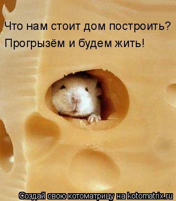 Котоматрица: Что нам стоит дом построить? Прогрызём и будем жить!