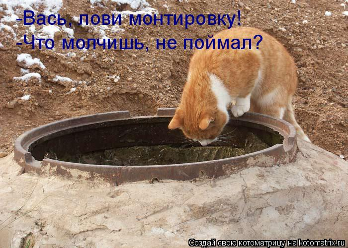 Котоматрица: -Вась, лови монтировку! -Что молчишь, не поймал?