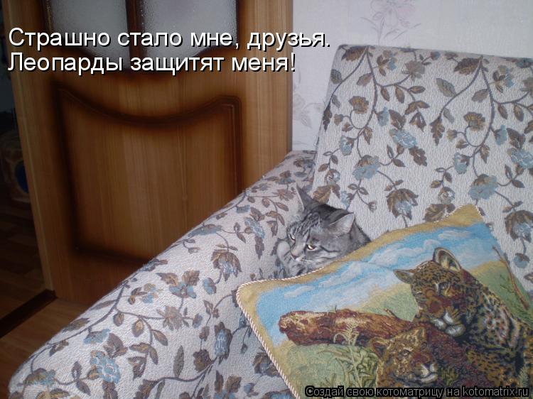 Котоматрица: Страшно стало мне, друзья. Леопарды защитят меня!