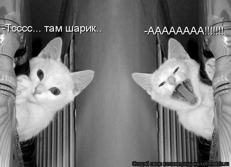 Котоматрица: -Тсссс... там шарик.. -АААААААА!!!!!!!
