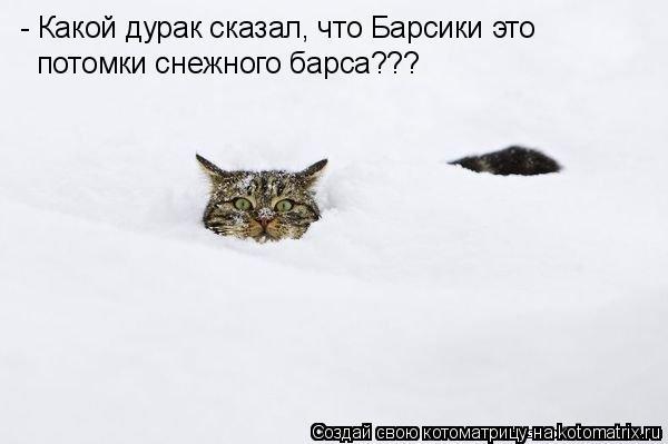 Котоматрица: - Какой дурак сказал, что Барсики это потомки снежного барса???