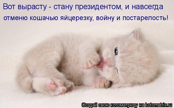 Котоматрица: отменю кошачью яйцерезку, войну и постарелость! Вот вырасту - стану президентом, и навсегда