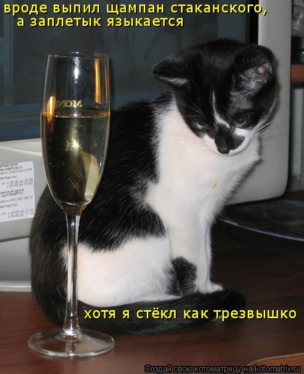 Котоматрица: вроде выпил щампан стаканского,  а заплетык языкается хотя я стёкл как трезвышко