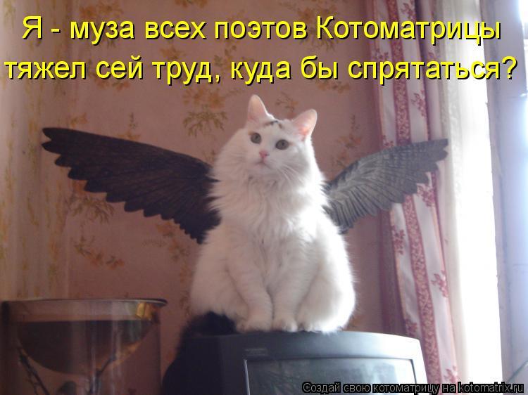 Котоматрица: Я - муза всех поэтов Котоматрицы тяжел сей труд, куда бы спрятаться?