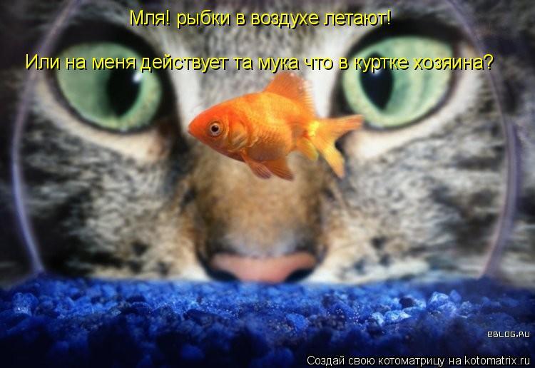 Котоматрица: Мля! рыбки в воздухе летают! Или на меня действует та мука что в куртке хозяина?