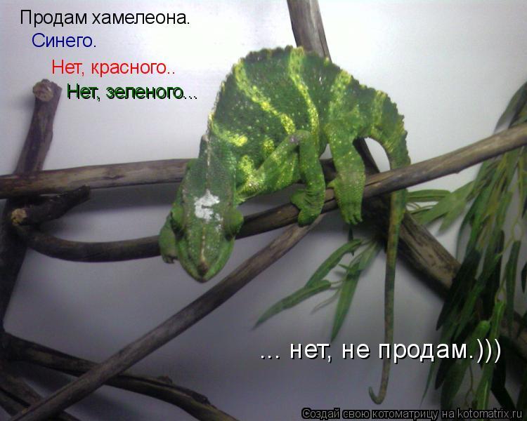 Котоматрица: Продам хамелеона. Нет, красного..  Нет, зеленого...  Синего. ... нет, не продам.)))