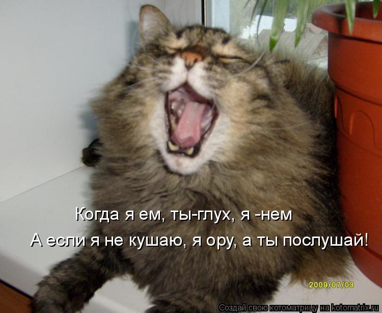 Котоматрица: А если я не кушаю, я ору, а ты послушай! Когда я ем, ты-глух, я -нем