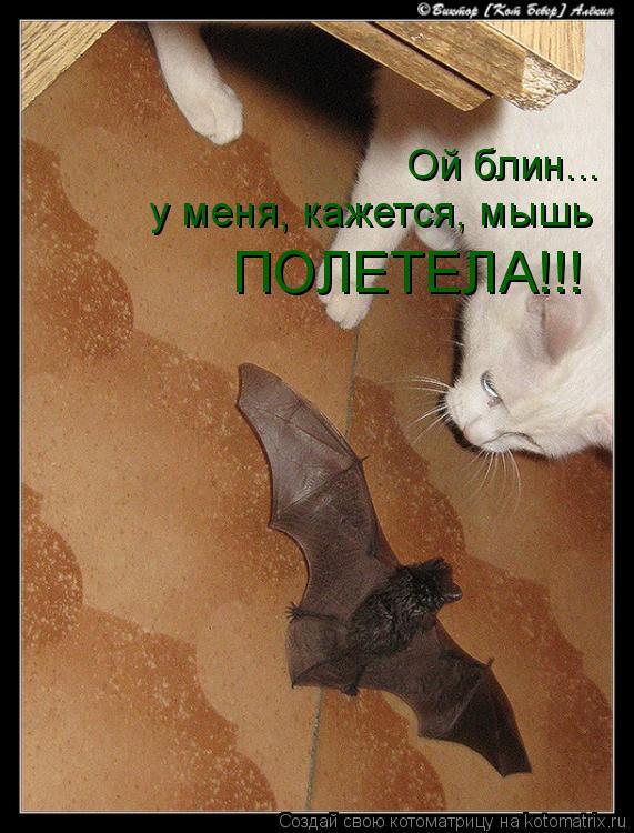 Котоматрица: Ой блин... у меня, кажется, мышь ПОЛЕТЕЛА!!!
