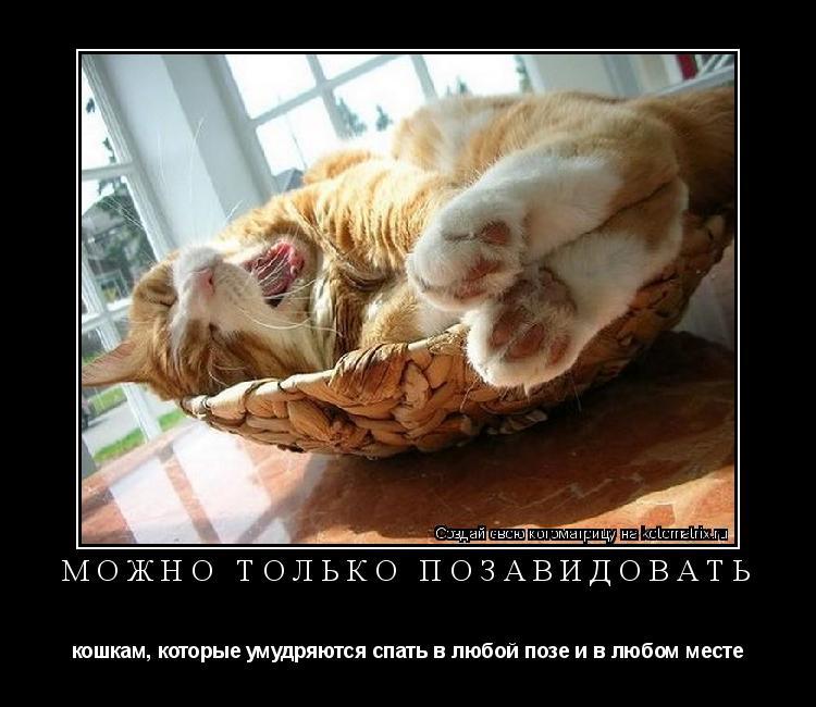 Котоматрица: Можно только позавидовать кошкам, которые умудряются спать в любой позе и в любом месте