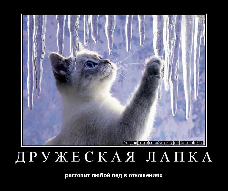 Котоматрица: ДРУЖЕСКАЯ ЛАПКА растопит любой лед в отношениях