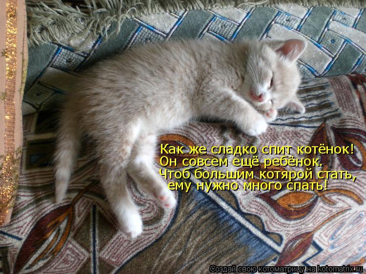Котоматрица: Как же сладко спит котёнок! Он совсем ещё ребёнок. Чтоб большим котярой стать, ему нужно много спать!