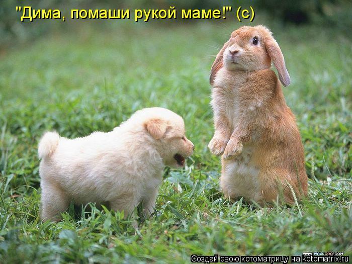 """Котоматрица: """"Дима, помаши рукой маме!"""" (с)"""