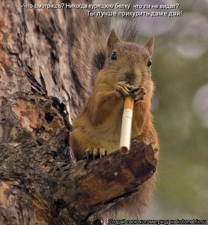 Котоматрица: -Что смотришь? Никогда курящюю белку что ли не видел? Ты лучше прикурить даме дай!