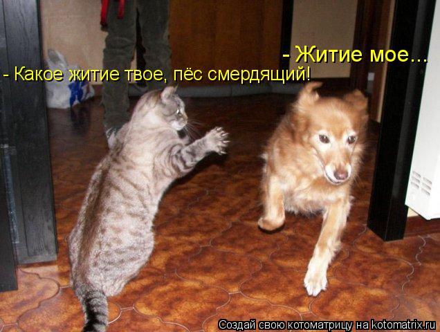 Котоматрица: - Житие мое... - Какое житие твое, пёс смердящий!