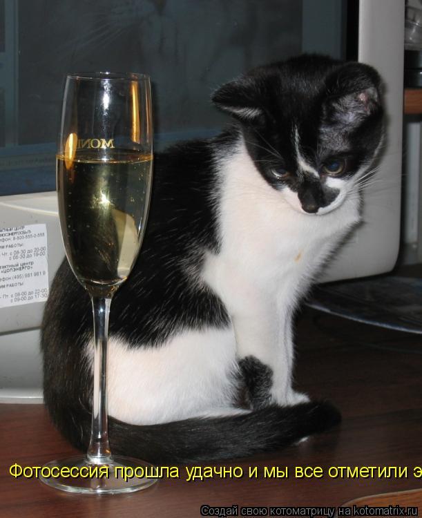Котоматрица: Фотосессия прошла удачно и мы все отметили это событие бокалом шампанского.