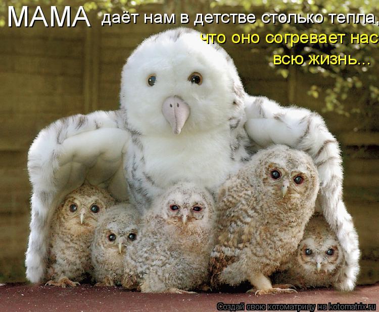 Котоматрица - МАМА даёт нам в детстве столько тепла, что оно согревает нас всю жизнь