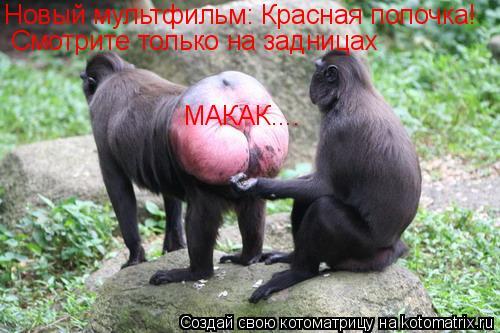 Котоматрица: Новый мультфильм: Красная попочка! Смотрите только на задницах МАКАК....